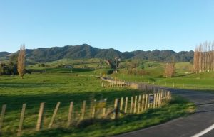 NZ Picture